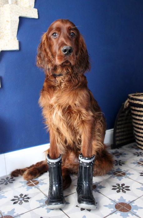 Hund mit Gummistiefeln